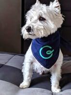 Guru Dog
